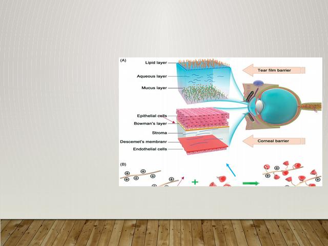 [Full text] In-vitro blood-brain barrier models for drug