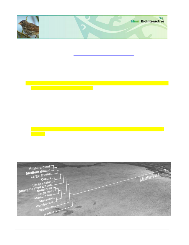 Finches Student Worksheet.docx - The Origin of Species The ...