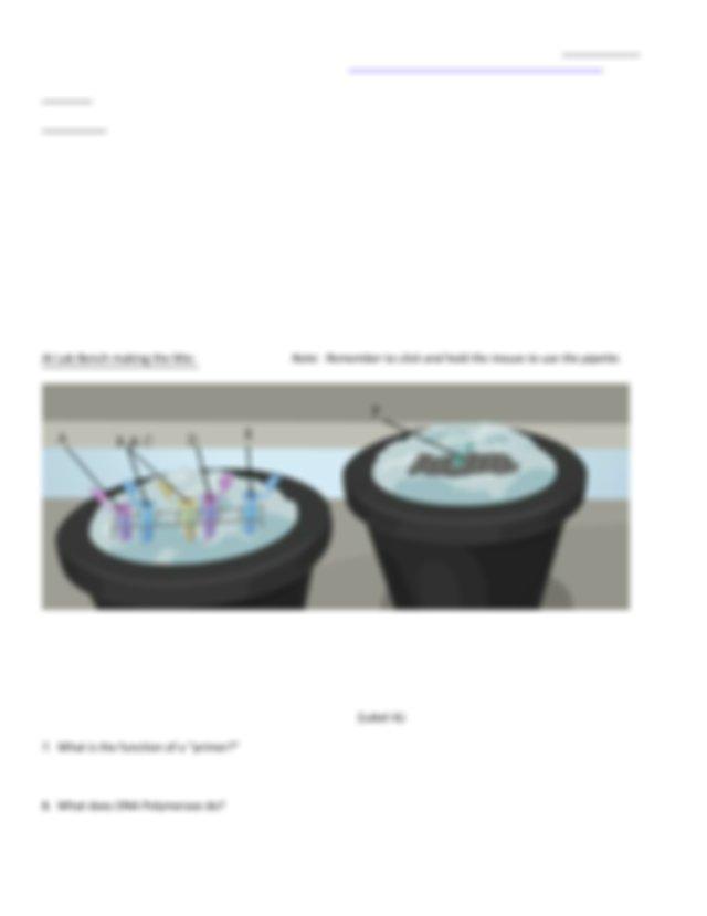 pcr-lab-sheetUtah.pdf - Student Web quest PCR Source ...