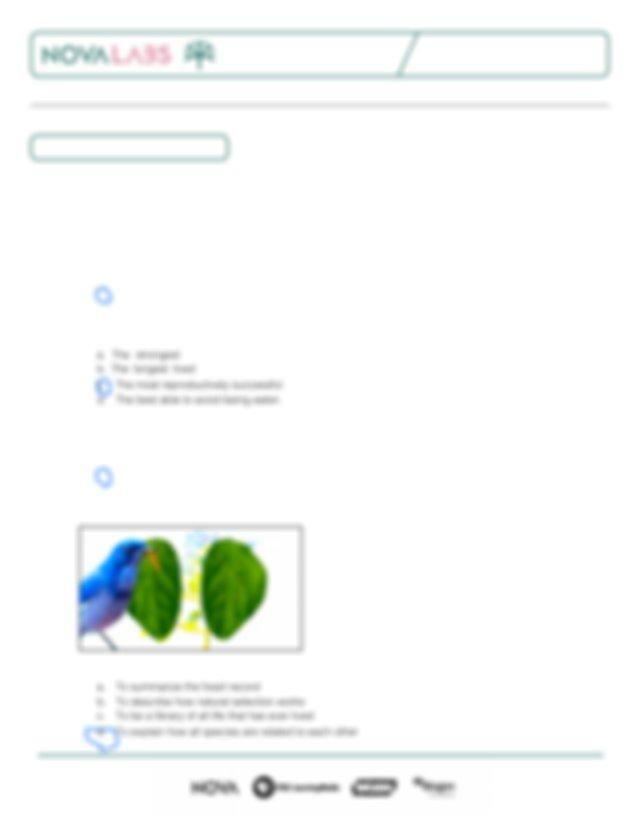 NOVA_Evolution_Lab_Worksheets (2).pdf - The Evolution Lab ...