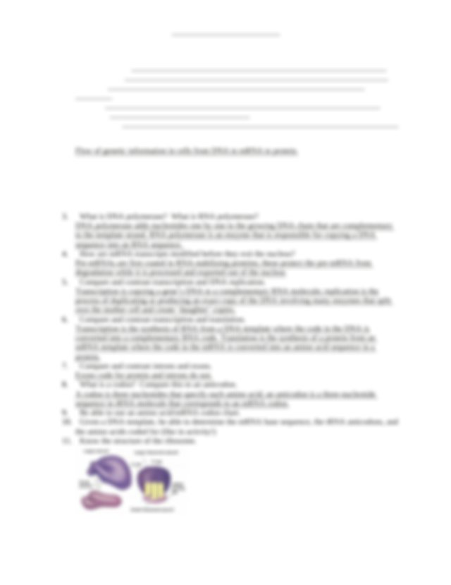 Biology Chapter 10 Study Guide.docx - Study Guide Protein ...