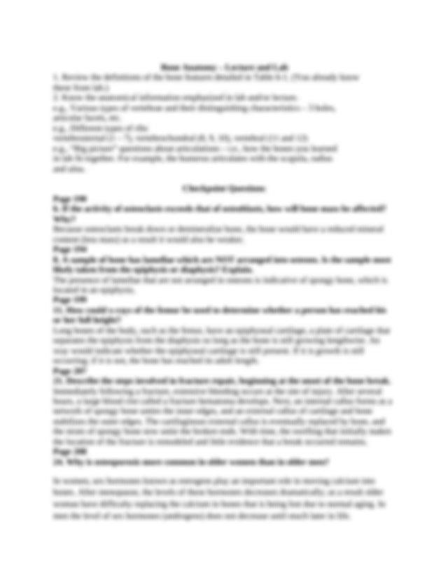 Art essays on bernini