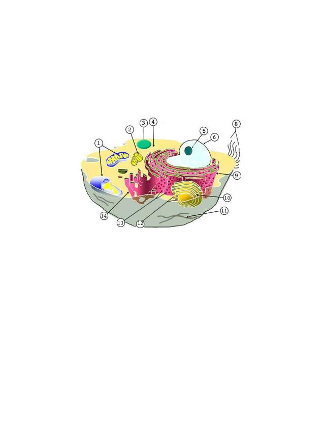 Animal Cells - Identify organelles-1 - Animal Cells ...