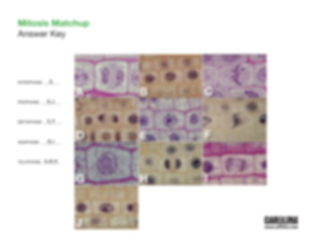 mitosis_matchup.pdf - Mitosis Matchup In this exercise you ...