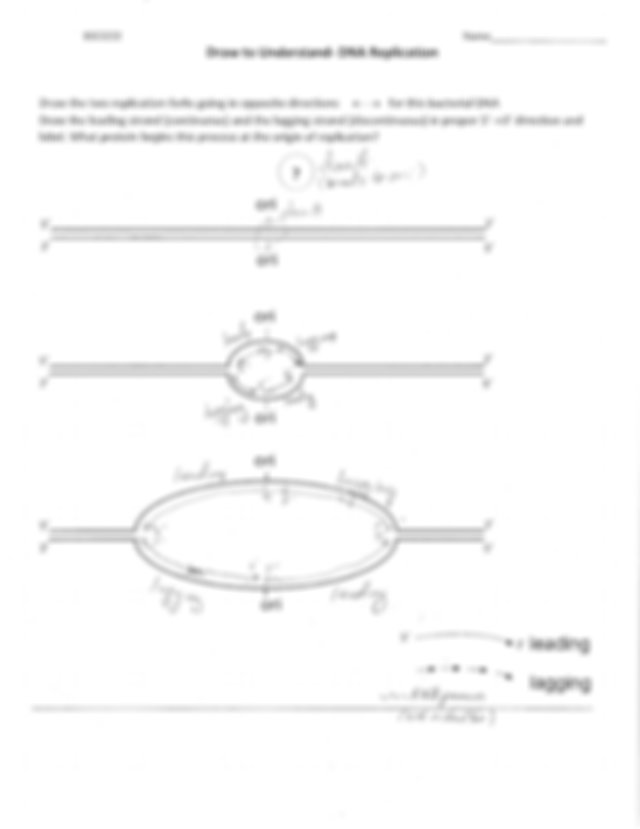 Draw to Understand DNA Replication answers-1.pdf - BSCI222 ...