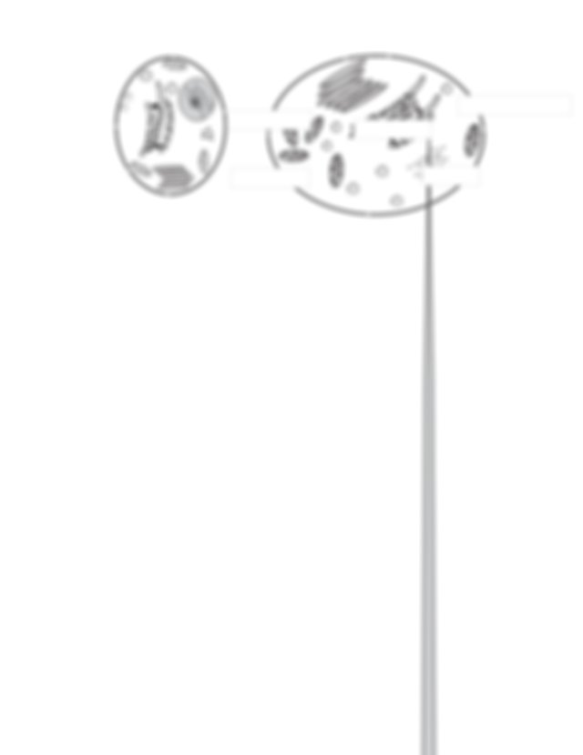 Cell Size-KEY - https\/www.youtube.com\/watch?v ...