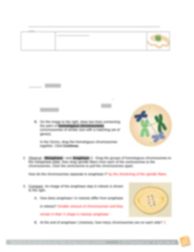 completed meiosis gizmo.docx - Name Gracie Gentry Date ...
