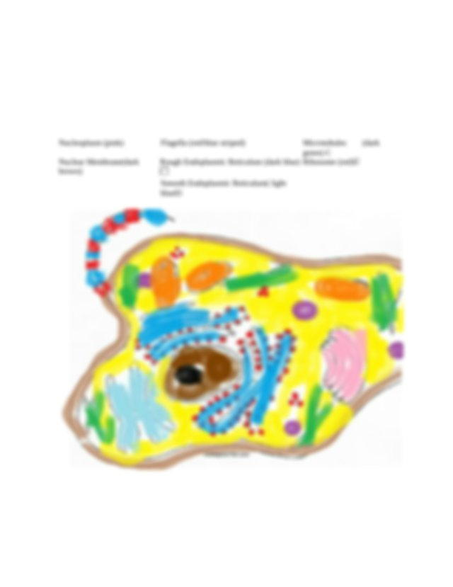 Animal cell HW 3.3.docx - Animal Cell Structure Name ...