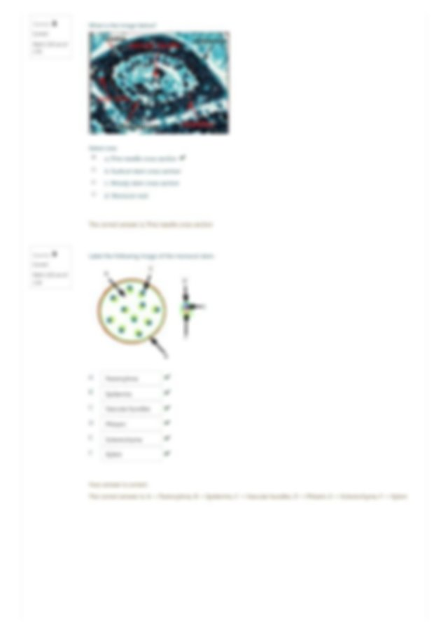 Plant Structure Lab Report.pdf - Home My courses 19SPCMP ...