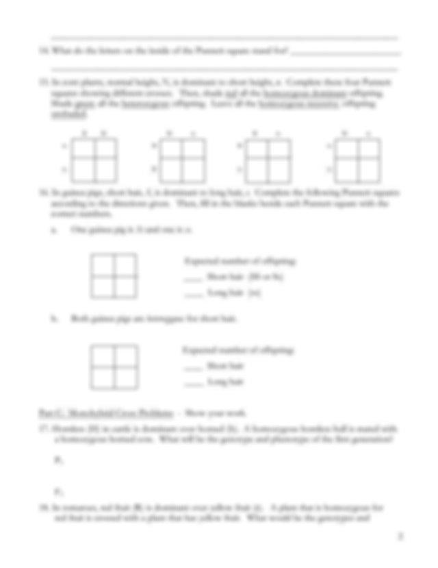Monohybrid-Cross-Homework - Monohybrid Cross Worksheet ...