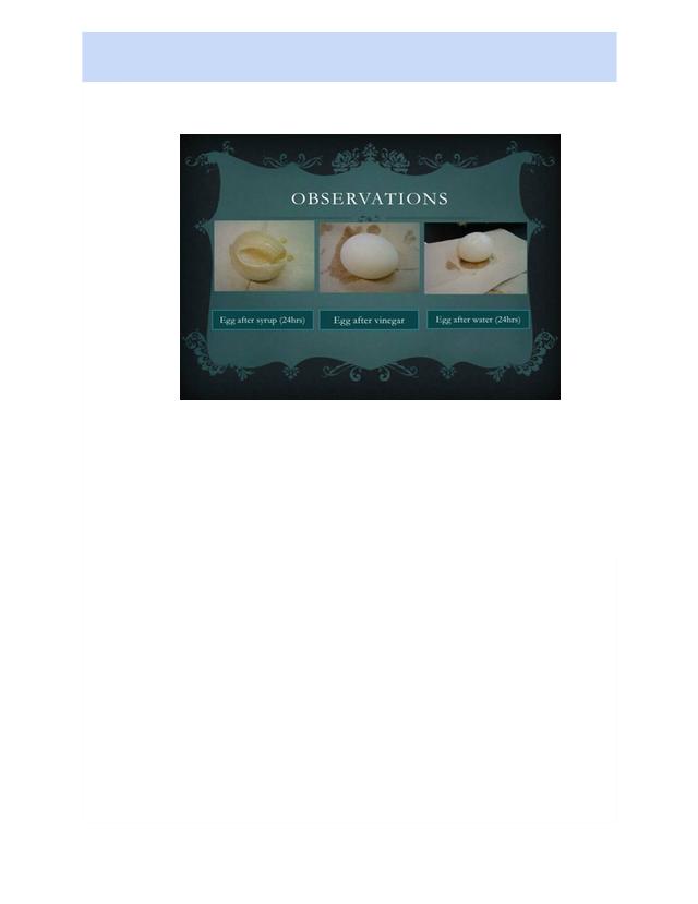 Osmosis on an egg.docx - Andrea valencia Period 5 Osmosis ...
