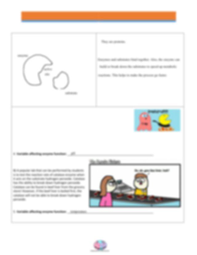EnzymesHWVer.pdf - AMOEBA SISTERS VIDEO RECAP ENZYMES ...