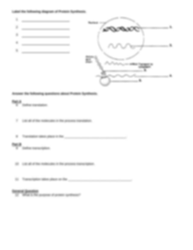 Protein_Synthesis_WS - Name Per Date Chapter 12 Protein ...