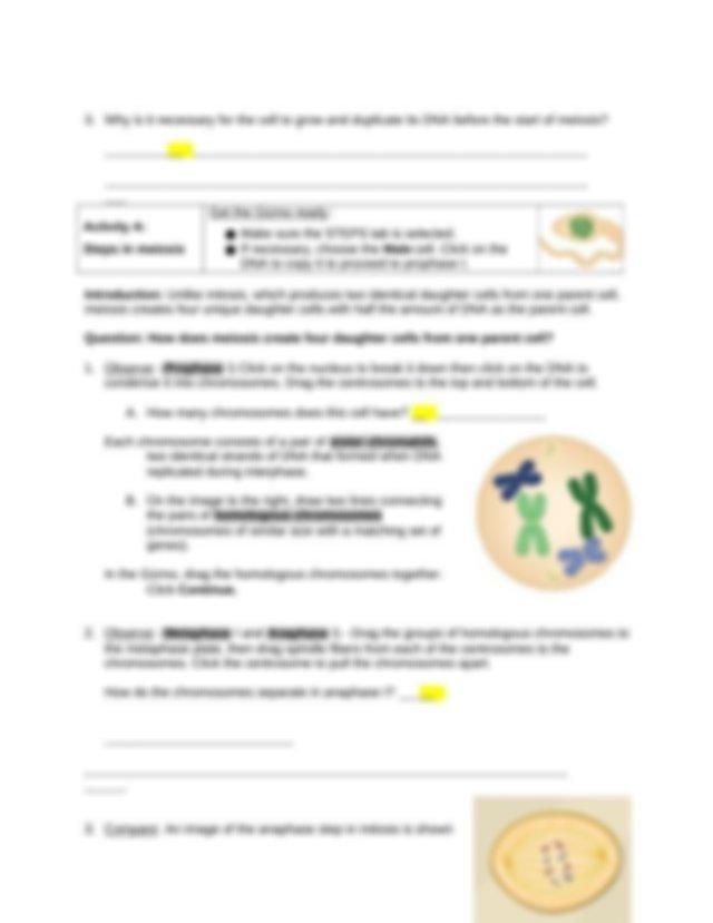 KASANDRA SILVA MILLAN - Meiosis Act A.docx - Name KASANDRA ...