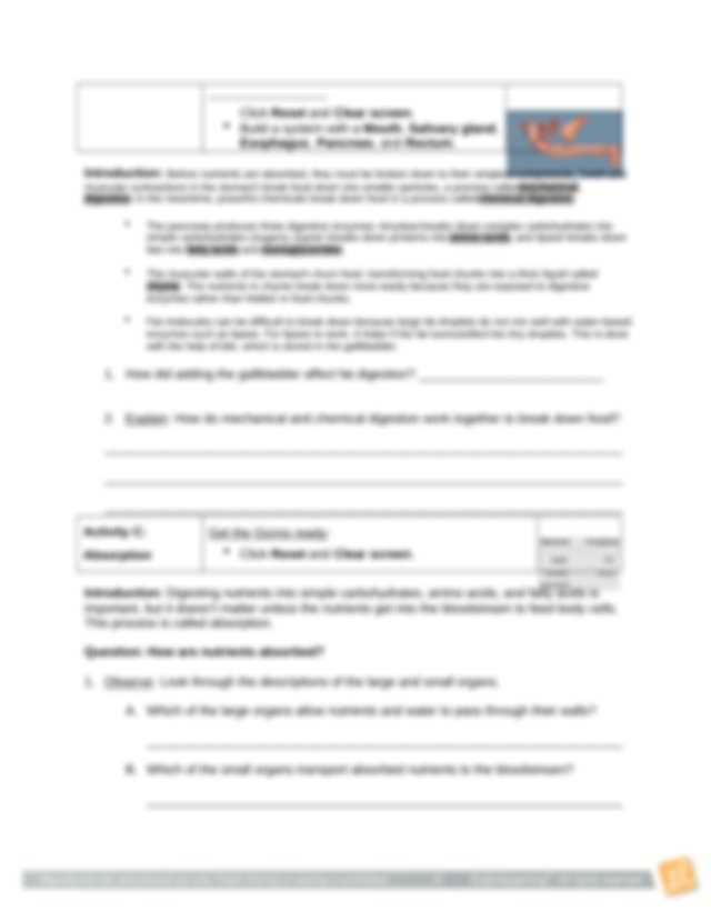 DigestiveSystemStudent Lab Sheet.docx - Name Date Student ...