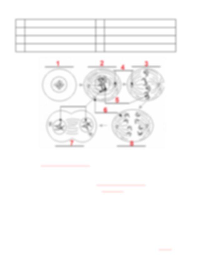 03_-_mitosis_worksheet - Mitosis Worksheet 1 Label the ...