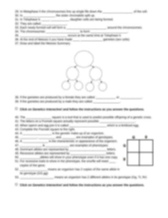 Snurfle Meiosis activity.docx - Snurfle Meiosis Genetics ...