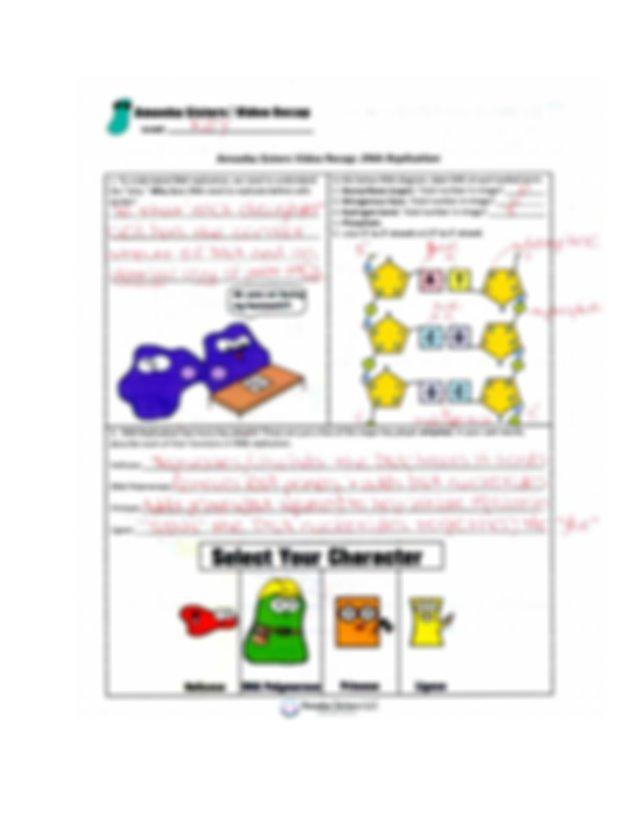 Amoeba Sisters DNA Replication Video Key.pdf - | Course Hero
