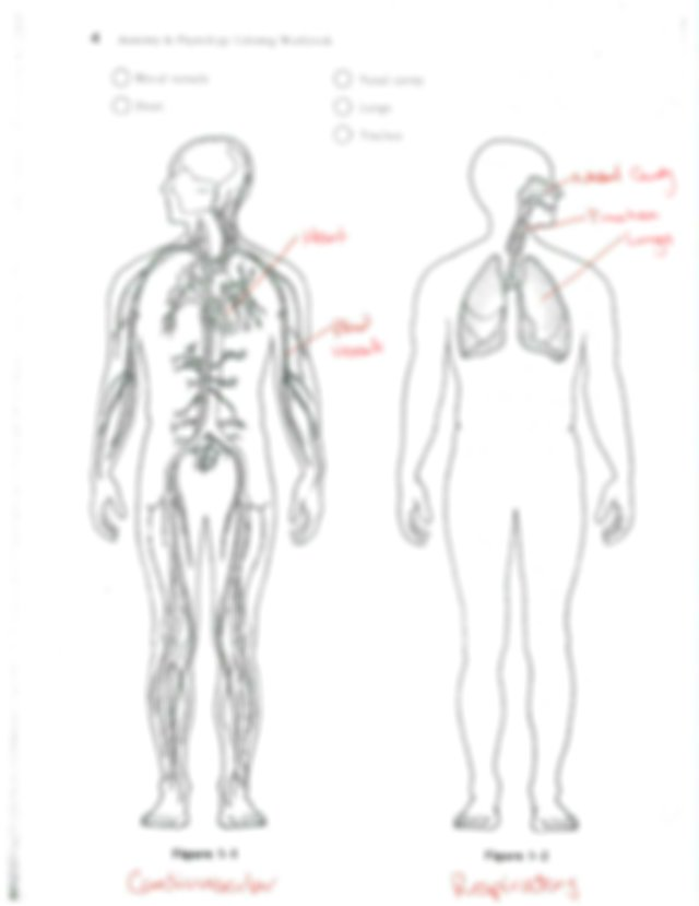 Coloring Workbook Ch1 Key - Tea THE HUMAN BODYzAN OREENTATEQN Most Of Us  Have A Natural Curiosity About Our Bodies And A Study Of Anatomy And  Physiology Course Hero