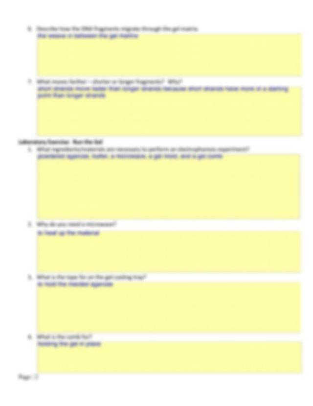 bio lab gel .pdf - Name This lab is my own work Date Gel ...
