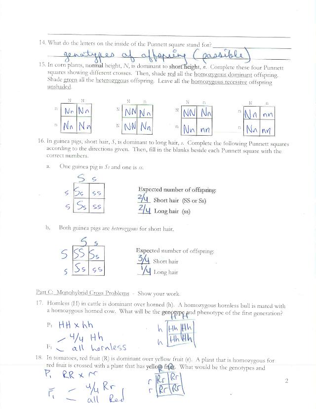 YA LA HICISTE 5 - Monohybrid Cross Worksheet Name Period ...