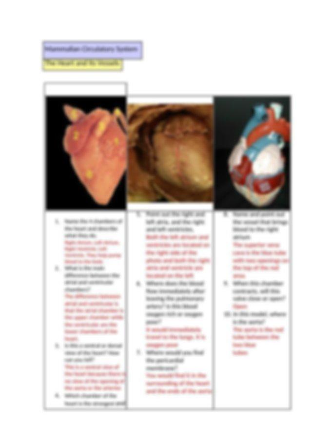 1409 Ch 24-Cardiovascular system Lab(1).docx ...