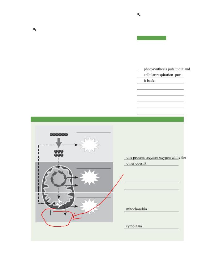Kaiden_Burroughs_-_BioChapter10Lesson1Workbook.pdf ...