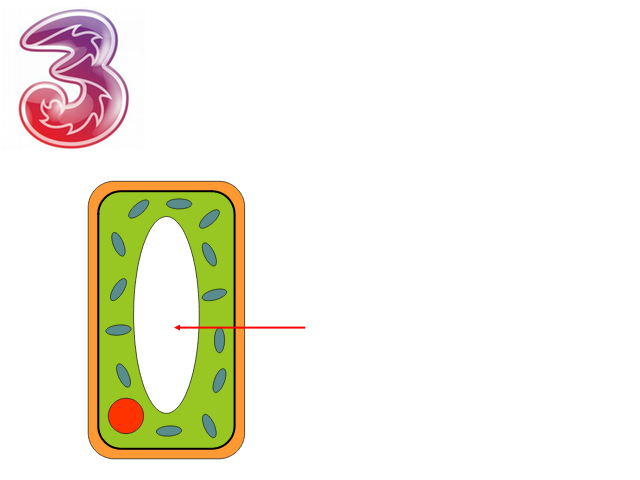 Y7 - Cells.pptx - Animal Plant Cells What is a cell What ...