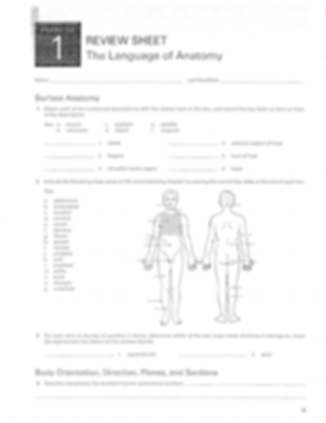 Worksheet 1 and 2 - REVIEW SHEET The Language of Anatomy ...