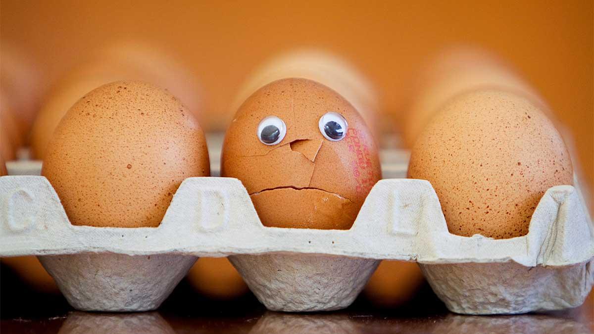egg drop contest