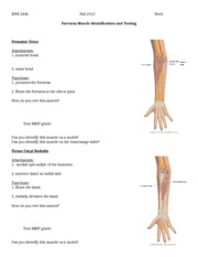 Upper Extremity Muscle Activity Part 2