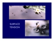 L4- Surface Tension
