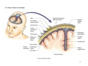 CNS_5_meninges_ventricles
