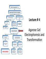 Lecture _4 Gel-Transformation- student