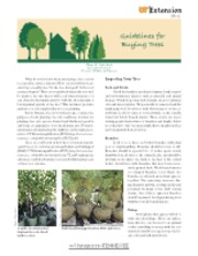 Guidelines for Buying Trees