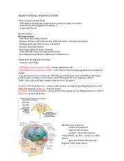 Notes on Brain & Central Nervous System