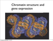 Lecture 6 Chromatin and Gene Expression
