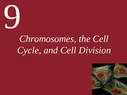 Ch09 - Chromosomes-Cell Cycle-Cell Division