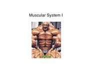 Chapter 9 & 10 Muscular System 1 Organ 2012
