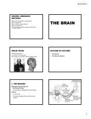Brain Part 1_2017_posted.pdf