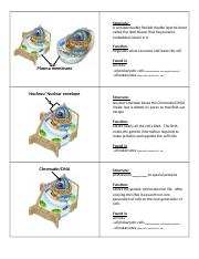 Flashcards Organelles.docx