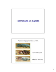12-Insect%20hormones[1]
