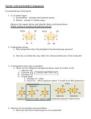 BIOL105-F - Chapter 3 Pt II - Nucleic Acid Activity - 28Aug2015