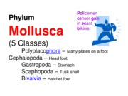 Lab Final Review--Mollusca