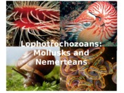 Lecture 20 - Mollusks and nemerteans.ppt