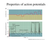 Lecture 4--action potential II