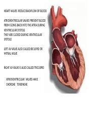 3- MORE ABOUT HEART.pptx