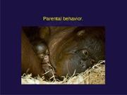 07-parental%20behavior