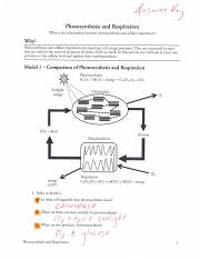 Photosynthesis Respiration Worksheet  12931812750561 – Chapter 8 additionally  as well Cellular Respiration and Photosynthesis   CK 12 Foundation besides  furthermore Photosynthesis and Respiration furthermore worksheets  Photosynthesis And Cellular Respiration Diagram Answers in addition Photosynthesis And Cellular Respiration Worksheet Answers The Best moreover photosynthesis and cellular respiration worksheet   Michael besides Photosynthesis and cellular respiration  parison worksheet likewise Photosynthesis And Cellular Respiration Worksheet Answers The Best further  also  further  besides Photosynthesis   Cellular Respiration Worksheet further Lesson 4 11  Life Science – Photosynthesis   Respiration also Answer Key  Photosynthesis and Respiration POGIL pdf   a wax t 4 5. on photosynthesis and respiration worksheet answers