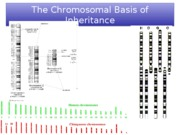 21_Chromosome inheritance III_forupload
